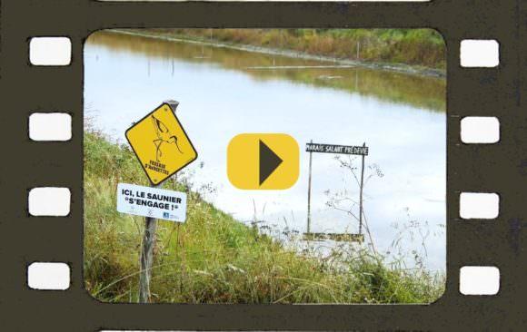 Le Marais Prédevie : une initiative pour la biodiversité à découvrir en vidéo