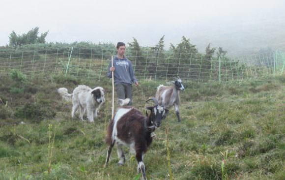 Un stage Gestion Protection de la Nature dans l'estive d'Elise et Olivier (paysans de nature dans les Pyrénées)