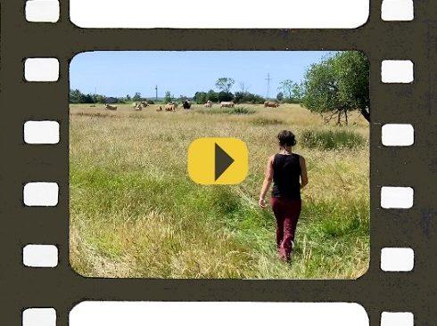 Lucie Maritaud, éleveuse de vaches maraîchines et paysanne de nature