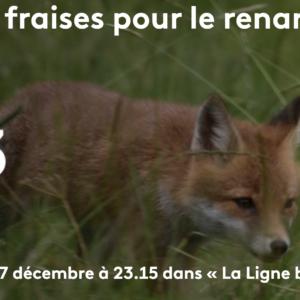 Deux fermes du réseau Paysans de nature à l'honneur sur France 3 !