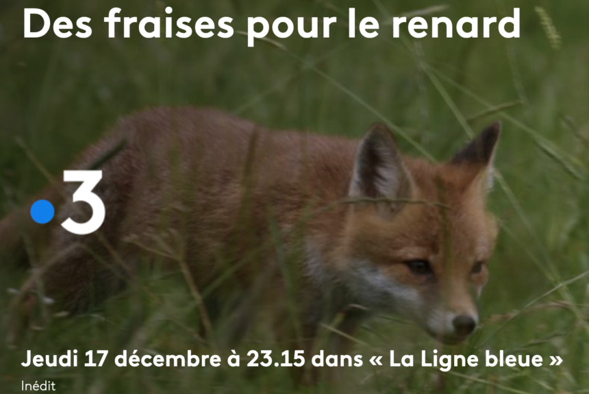 Film des Fraises pour le Renard - France 3