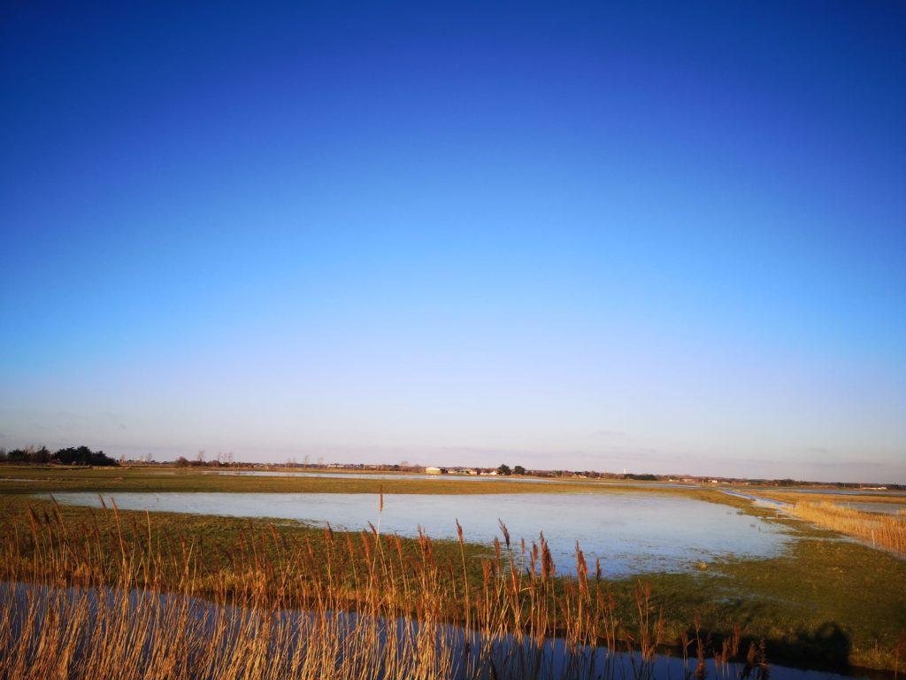 prairies inondées des Cochets