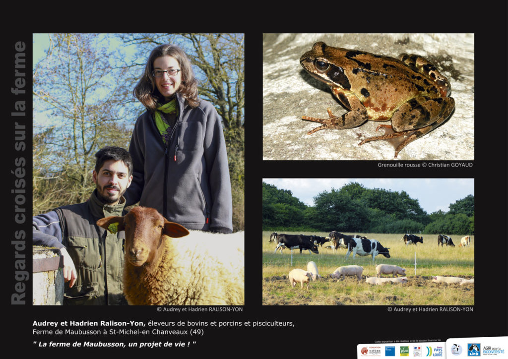 """Panneau de l'expo """"Regard croisés sur la ferme"""" Ferme de Maubusson (49) © LPO Pays de la Loire"""
