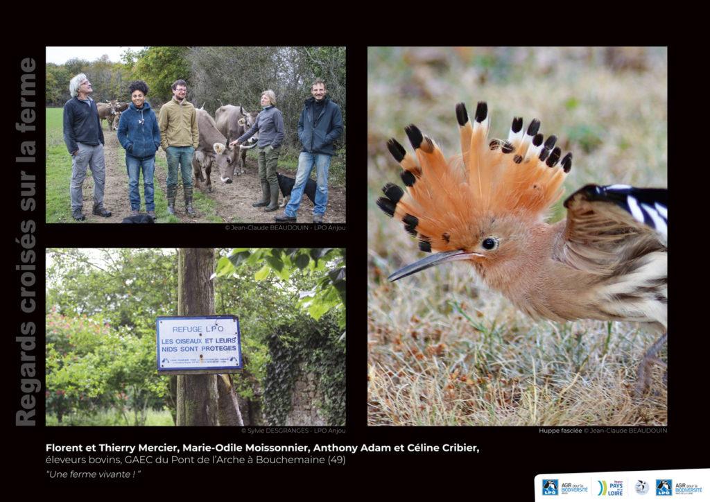 """Panneau de l'expo """"Regard croisés sur la ferme"""" GAEC du Pont de l'Arche (Bouchemaine - 49) © LPO Pays de la Loire"""