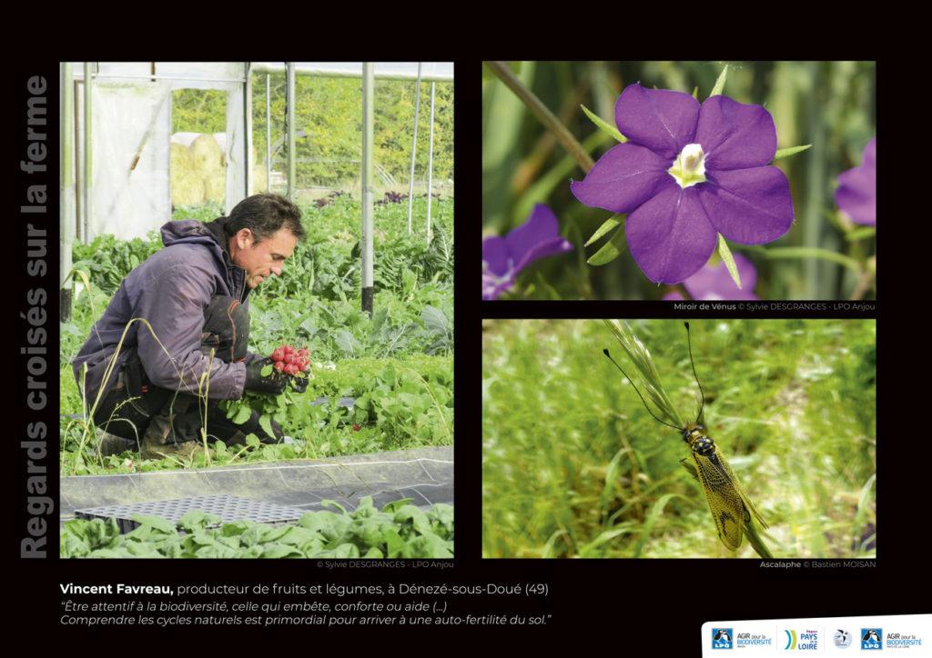 """Panneau de l'expo """"Regard croisés sur la ferme"""" Vincent Favreau (49) © LPO Pays de la Loire"""