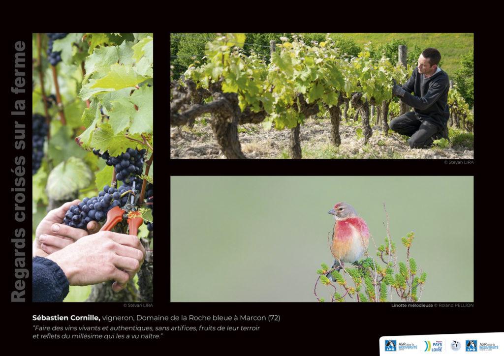 """Panneau de l'expo """"Regard croisés sur la ferme"""" Domaine de la Roche bleue (Marcon - 72) © LPO Pays de la Loire"""