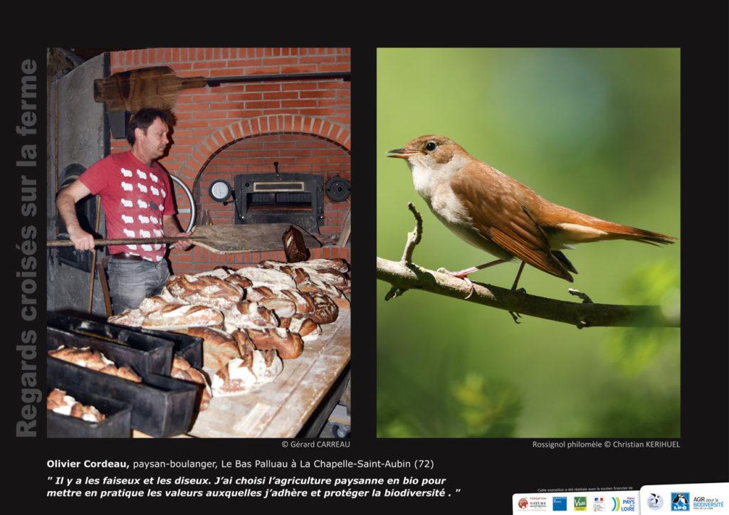 """Panneau de l'expo """"Regard croisés sur la ferme"""" Olivier Cordeau (La Chapelle-Saint-Aubin - 72) © LPO Pays de la Loire"""