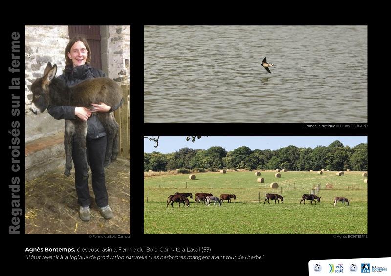 """Panneau de l'expo """"Regard croisés sur la ferme"""" de l'Asinerie du Bois Gamats - © LPO Pays de la Loire"""