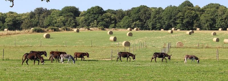 Pension des ânes au prés - Photo © Agnès Bontemps