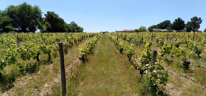 Vignes en Anjou - Photo © Mélissa Monthouel - LPO Pays de la Loire
