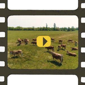 Micro-filière Biodiversités maraîchines : vidéo à voir et à revoir
