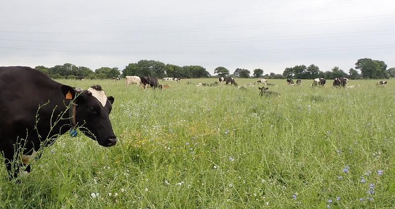 Prairie naturelle de la  Ferme Laits Prés Verts Photo © LPO Loire-Atlantique